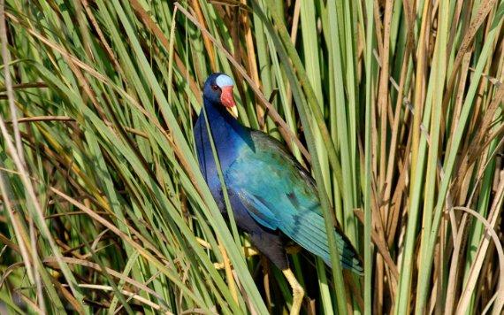 Everglades National Park est le paradis des amoureux des oiseaux
