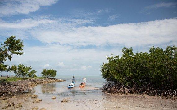 Le kayak est une autre façon de voir la faune