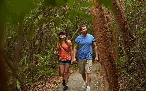 Wandern in Everglades National Park Gumbo Limbo Trail