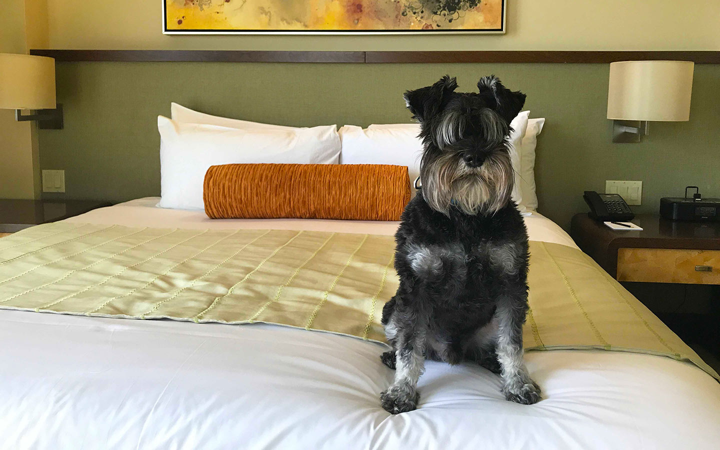 Dog on bed at Mandarin
