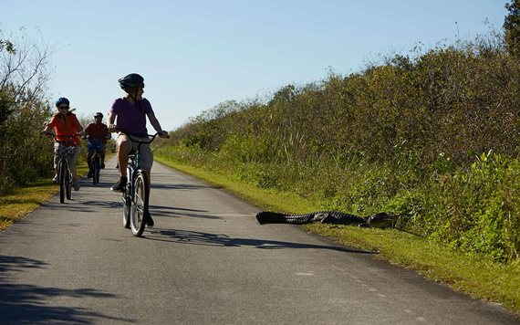 Bike through the Everglades
